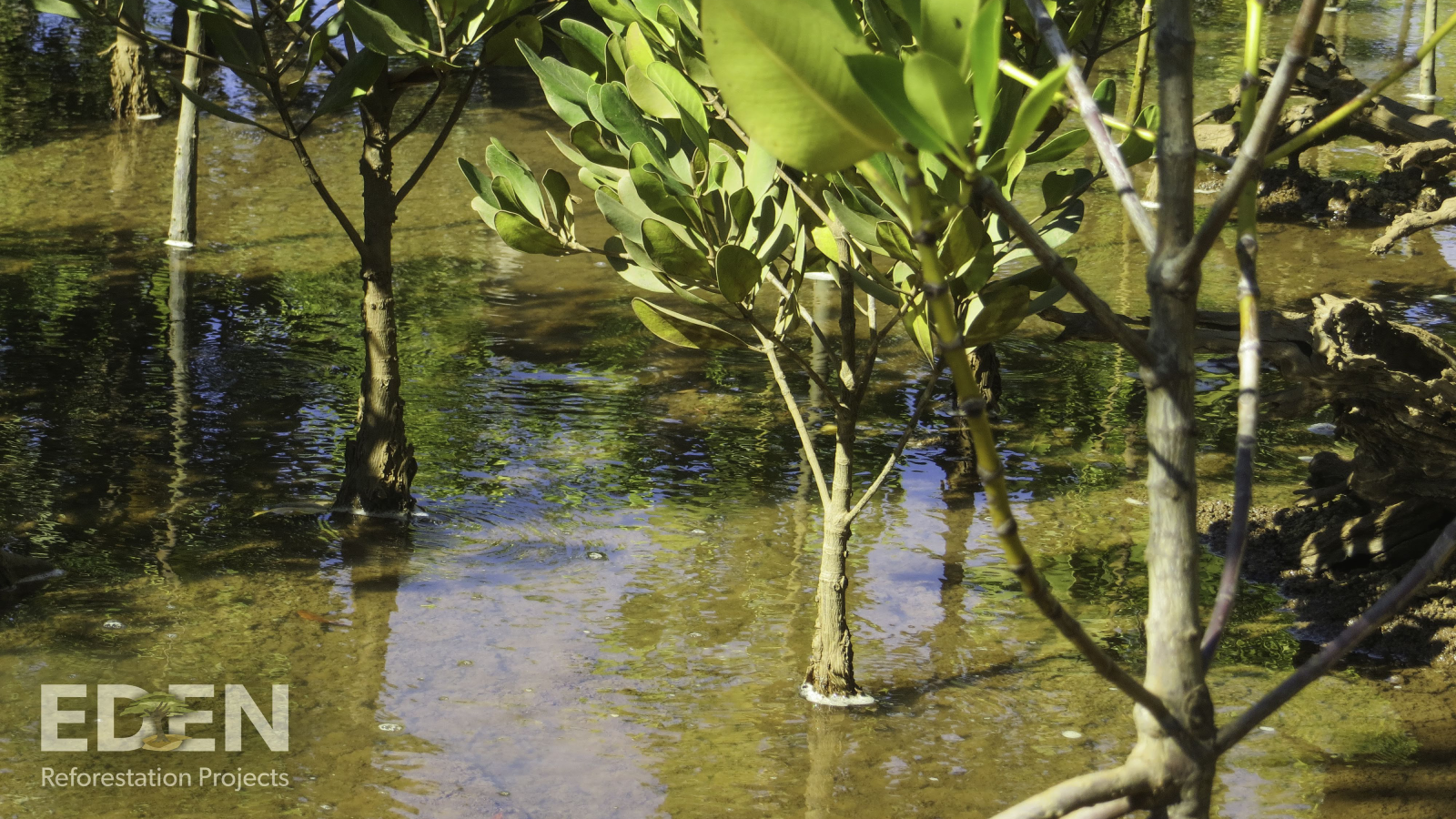 Our Mangroves in Madagascar