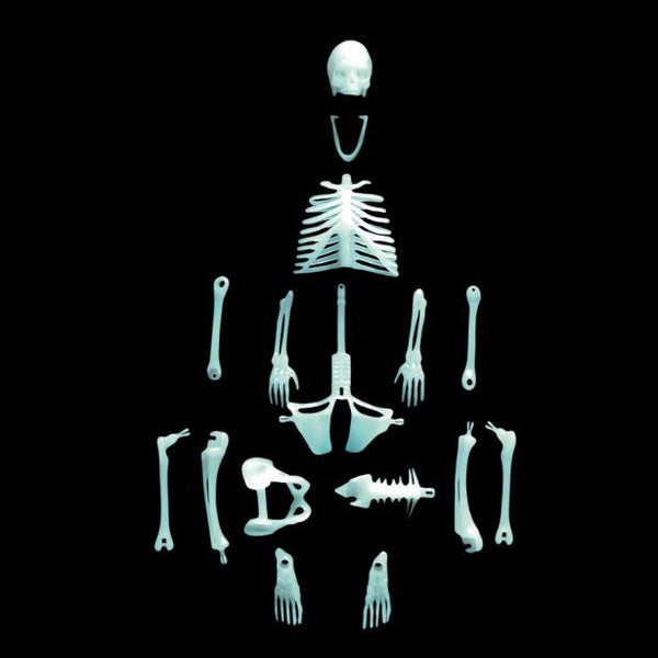 Glow in the Dark Human Skeleton
