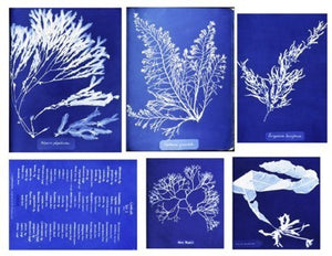 Collage Sheet Cyanotype Algae
