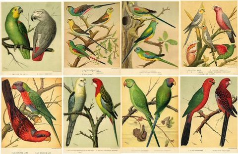 Collage Sheet Bird Chromolithographs