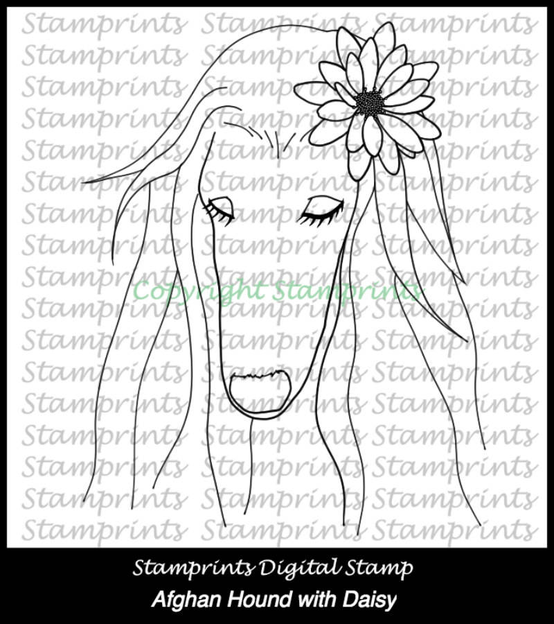 Afghan Hound with Daisy (TLS-1721) Digital Stamp. Cardmaking.Scrapbooking.