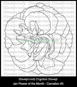 January Flower of the Month - Carnation #3 (TLS-1714) Digital Stamp.