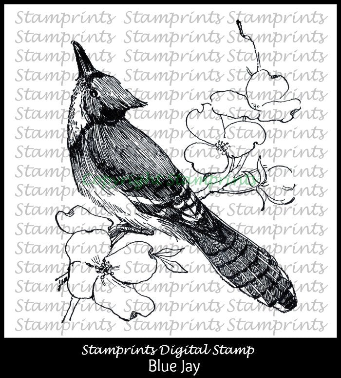 Digital Stamp - Blue Jay VIS-169 (Stamprints). Printable Vintage Images.