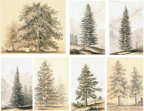 Collage Sheet Watercolor Trees