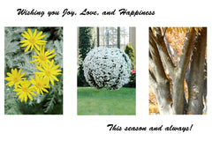 """Joy"" Photographic Greeting Card (Box of 6 cards)"