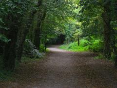 Photo of path near Wellington Monument, Somerset, England