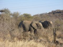 Photo of Elephants standing in veld