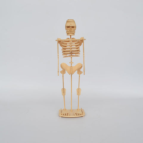 Artificial Skeleton Toys 3D Human Body