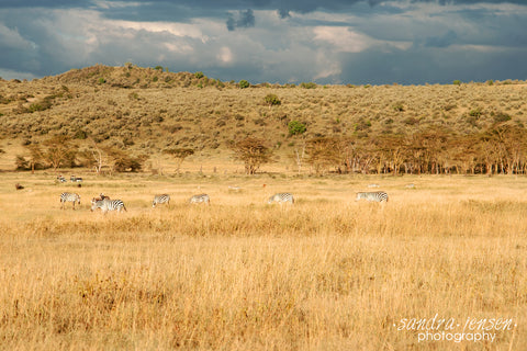 Print - Africa - Lake Nakuru National Park with Zebras