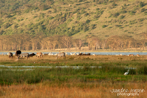 Print - Africa - Wildlife at Lake Nakuru National Park