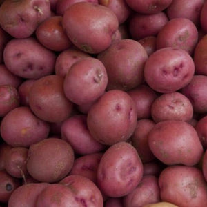 2 lb Organic Red Bliss Potatoes *