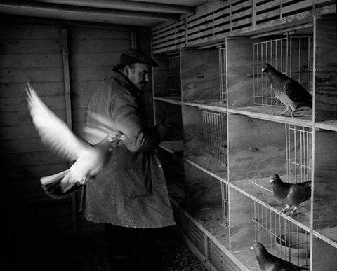 Peter Fryer, Pigeon Fancier, Newcastle upon Tyne