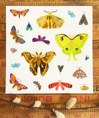 Moth stickers