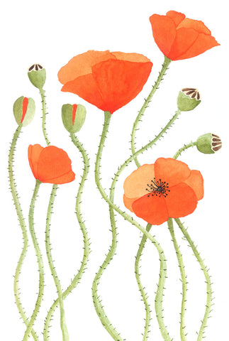 poppies - postcard