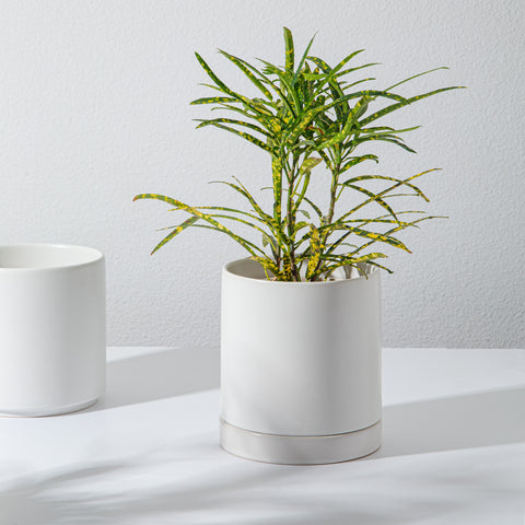 Planter and Saucer