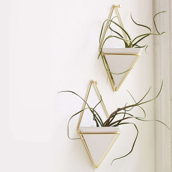 Wall Vessel and Planter Set