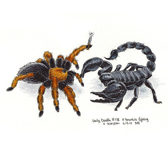No.138 A tarantula fighting a scorpion