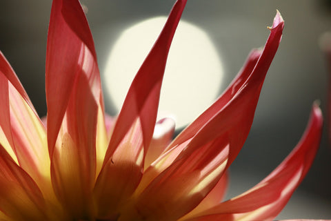 Large Abstract Flower Photo
