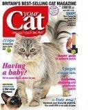 Your Cat Magazine's Feline Fashion – April 2008