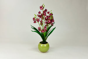 Amaryllis Flowers with Green Pot