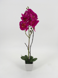 Single Tall Fuchsia Orchid with White Pot