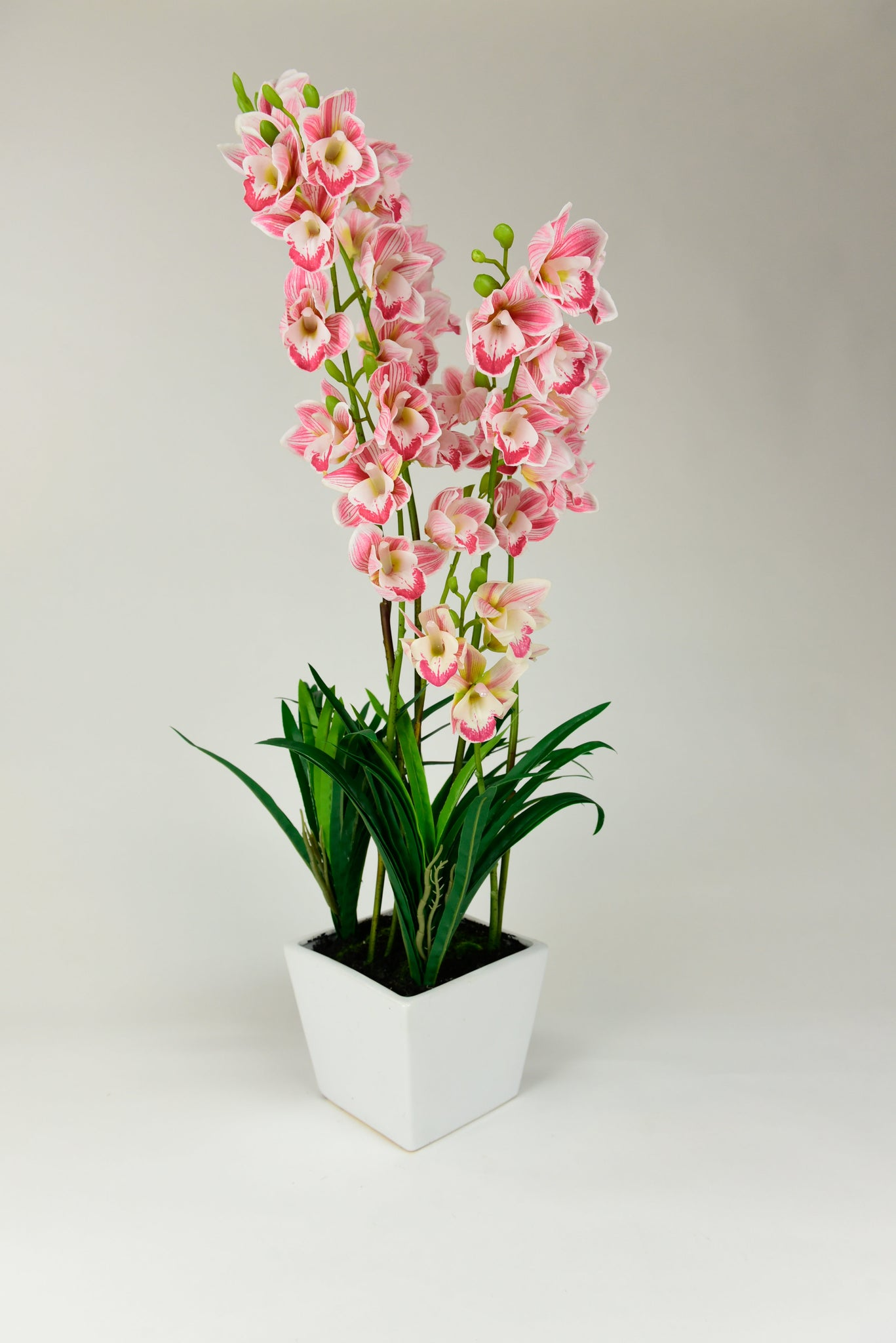 Pink/White Orchids with White Pot