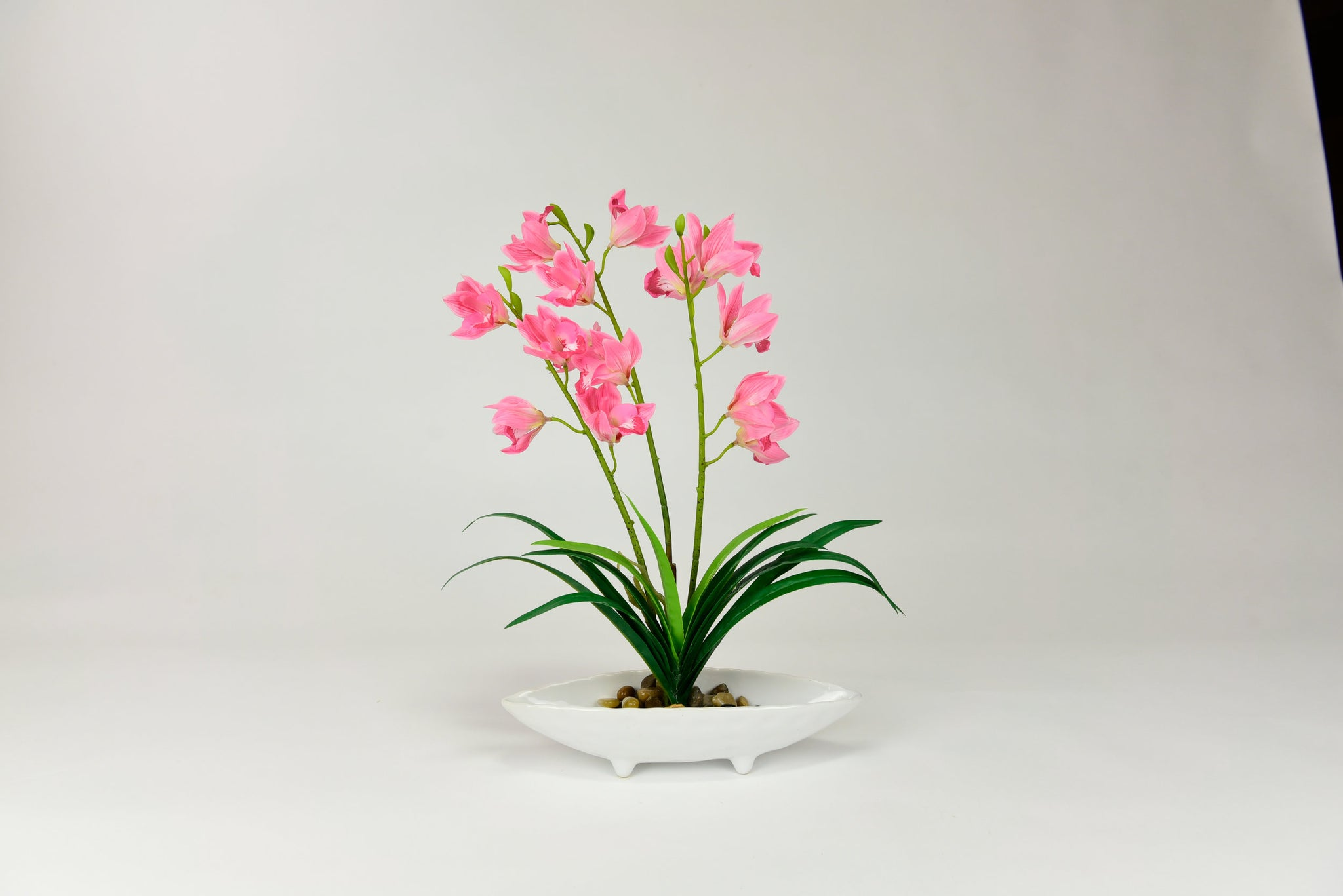 Pink Amaryllis Flowers with Shallow White Pot