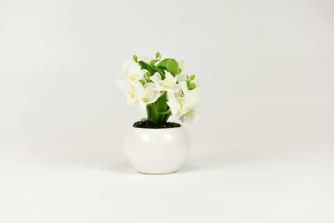 White Orchid Flowers with Circular White Pot