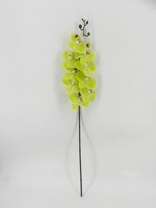 Single Light Green Orchid