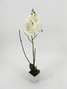 Single Tall White Orchid