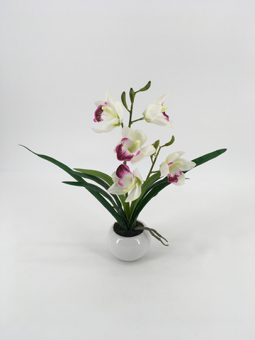 White and Purple Orchid in Circular White Pot
