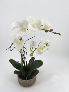 White Orchid in Tree Log Pot