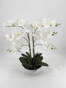Grand White Orchid in White Pot