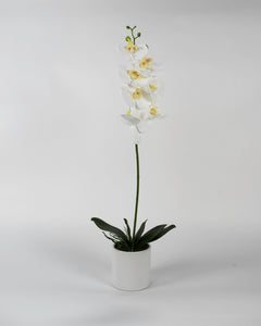 Single White Orchid with White Pot
