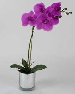 Single Purple Orchid with Mirror Pot