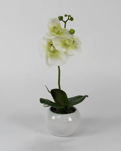 Single White Orchid with Circular White Pot