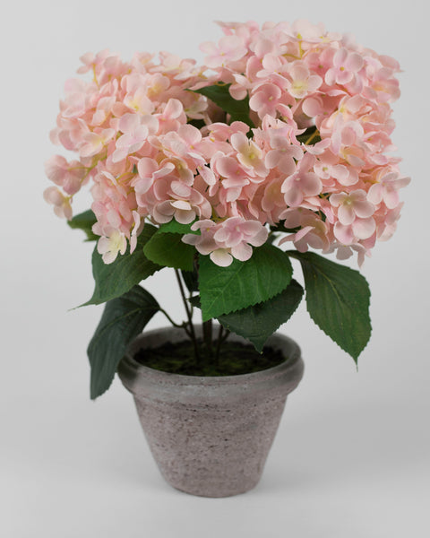 Pink Hydrangea with Grey Pot