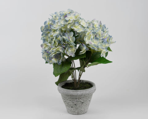 Blue and Yellow Hydrangea with Light Grey Pot