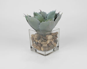 Blue Succulent in Rocks with Glass Pot