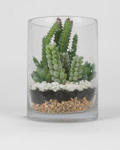 Assorted Succulents in Glass Vase
