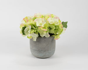 Yellow/Pink Hydrangea with Stone Colored Pot