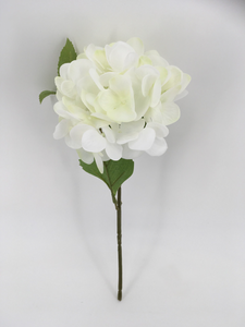 Single White Hydrangea
