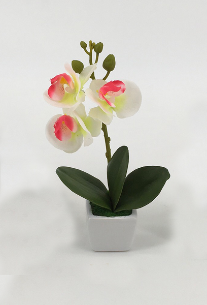 Assorted Orchids in Square White Pot