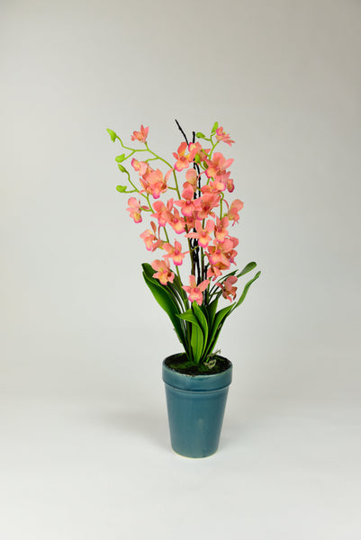 Orange Orchid Flowers with Teal Pot