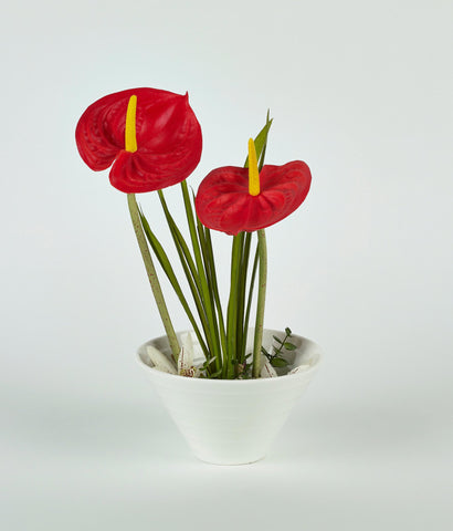 Red Flowers in White Vase
