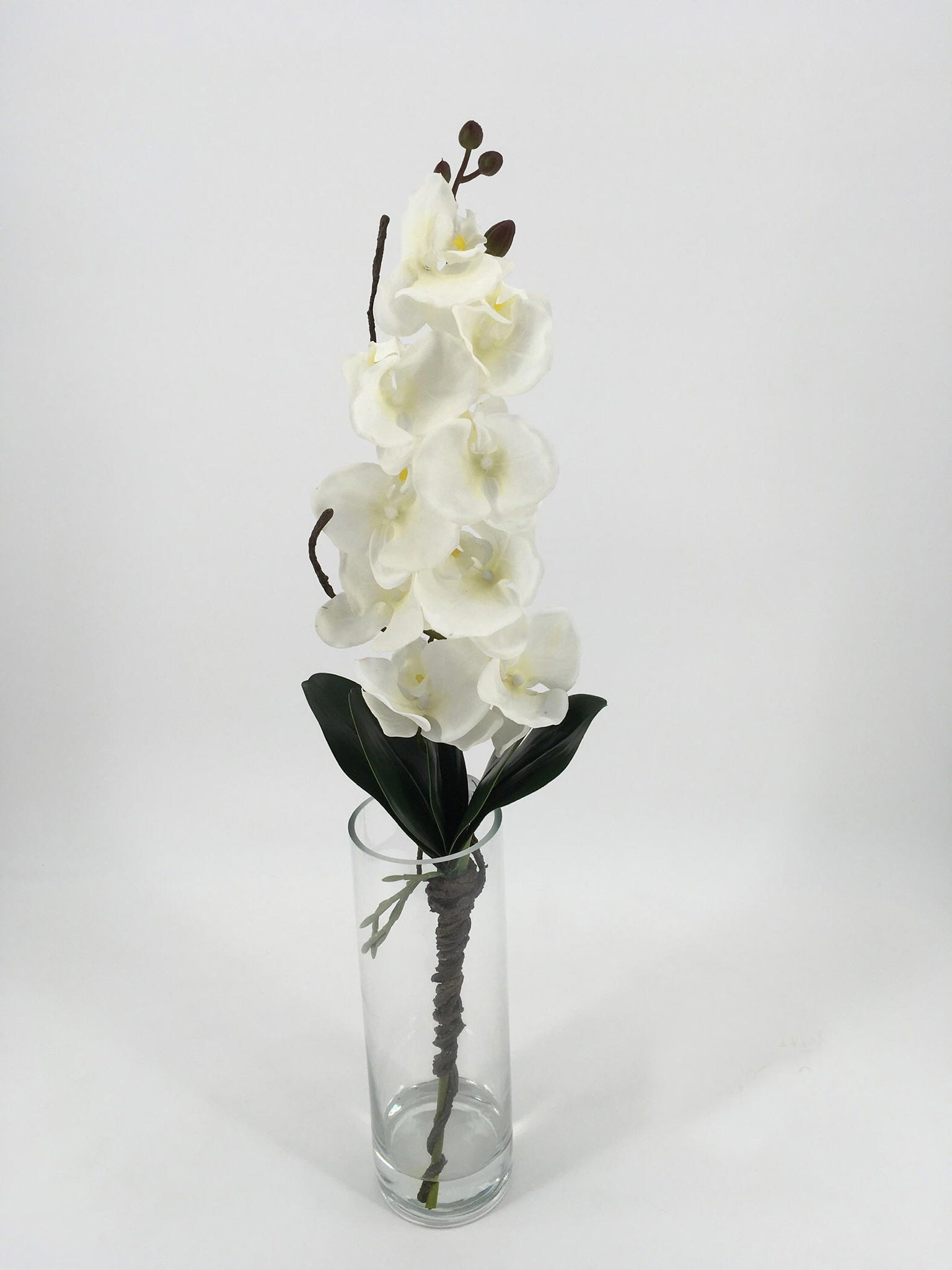 Pure White Orchids in Tall Glass Vase