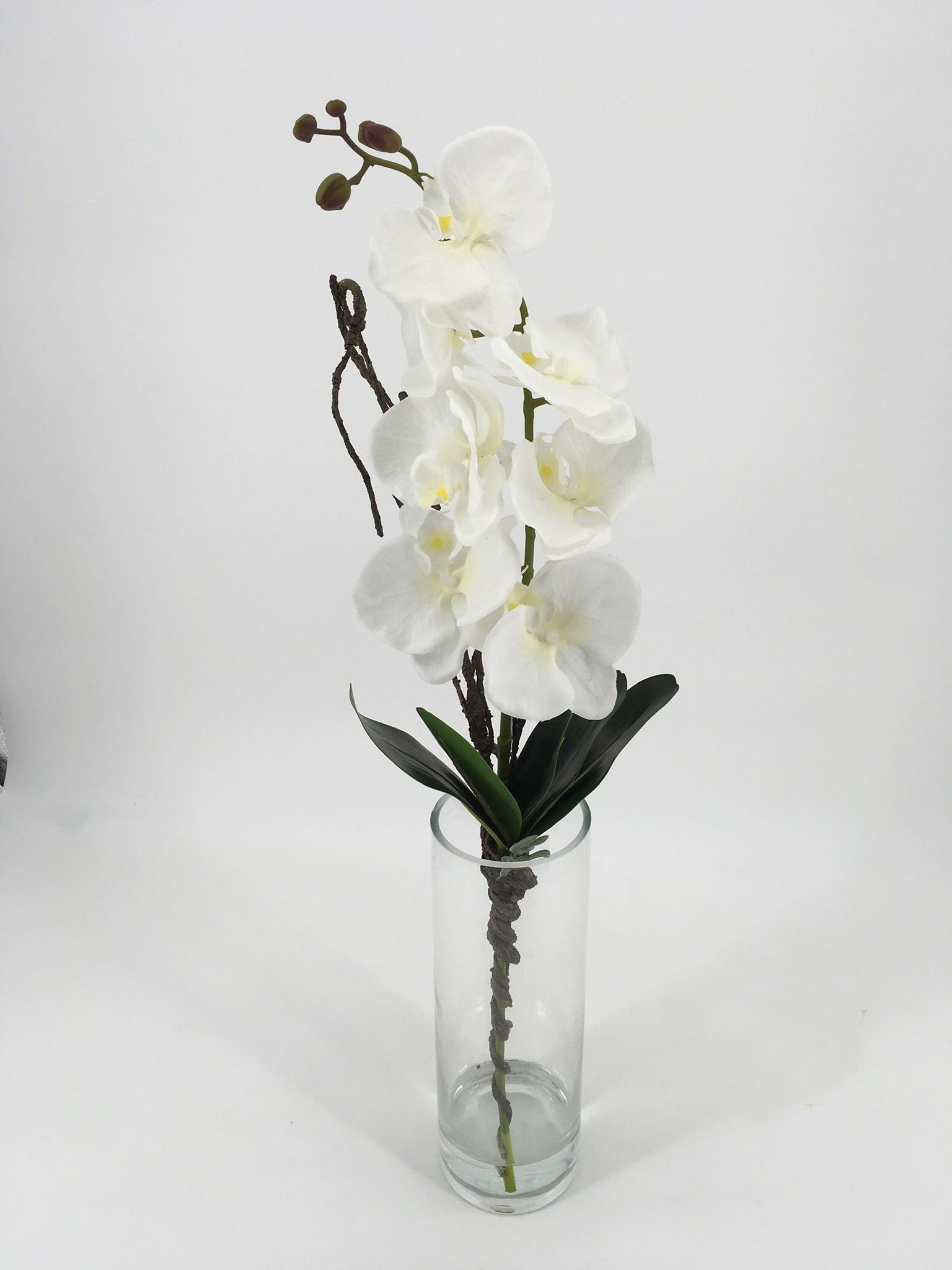 Tall White Orchids in Glass Vase