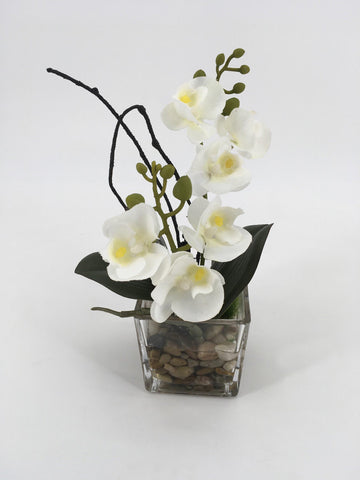 White Orchids in Square Glass Vase with Rocks