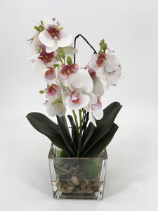White and Pink Orchids in Glass Vase with Rocks