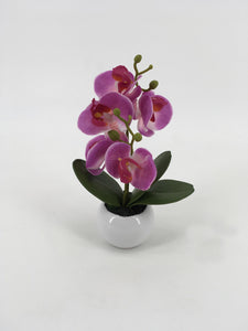 Purple/Pink Orchid